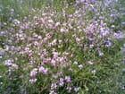 Un tapis de fleurs sauvages par Evelyne Pellier sur L'Internaute