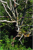 L'arbre mort - Serge AGOMBART