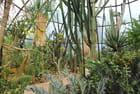 Jardin botanique - Josiane CASTREC