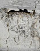 Un nid d'hirondelles... - Anne Jeanty
