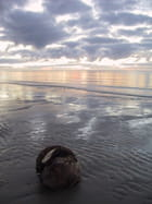 Noix de coco sur la plage - Hervé LE ROY
