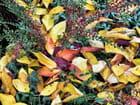 Image d'automne - Raymond ROCHETTE
