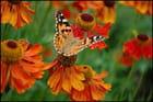 jardin des papillons -