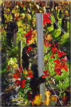 Rouge automne. - Serge AGOMBART