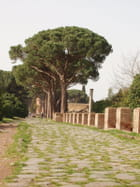 Voie romaine - Araucaria Araucana