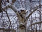 arbre et neige - marie-helene renaux