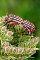 Insectes et cie - Marie-paule EUZÉNAT-VINTENAT