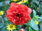 Rouge et jaune au jardin - Malou TROEL