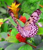 Jardin des papillons de knokke par Marc LEGRAND sur L'Internaute
