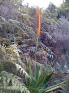 Flore de Madagascar - Dilann Tours Madagascar