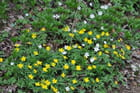 belle journée de printemps en forêt - brigitte erpelding