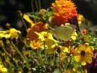 Fleurs et papillons ... -