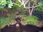 Jardin Japonais (6) - Jean-pierre MARRO
