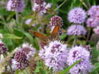 Fleurs et papillon - Juliane PHILIPPOT