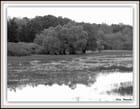 Lac du Der en noir et blanc - ELISE MURIELLE CHAGNEAU