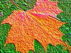 Feuille d'automne en relief. par jean-marc puech sur L'Internaute