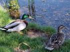 Les deux canards - Michel BINETRUY
