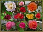 Les roses de septembre - Jacqueline DUBOIS
