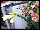 Bouquets 3 - Béatrice PAYANT