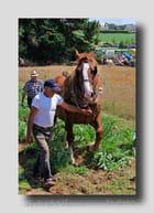 Le cheval et l'homme. - Serge AGOMBART