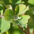 Perles de feuille - stephane dupouet