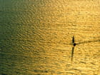 Bateau sur une mer d'or par Henri MANGUY sur L'Internaute