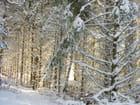 lumière hivernale en sous bois - Ghislaine KENNER