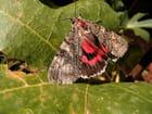 Papillon sur figuier par Jean paul CANO sur L'Internaute