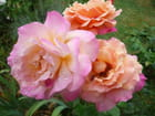 Dans mon jardin - jacqueline marie maury