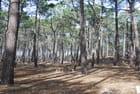 L'aire de pique nique dans les bois par Genevieve LAPOUX sur L'Internaute