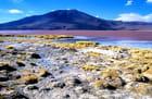 La Laguna Colorada, une merveille des Andes. - Alice AUBERT