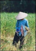 H.C.M. Q1 1999 - jean paul herbecq