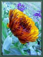 Chou et Fleurs - Huguette Roman