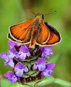 Petit papillon Sylvaine - Angélique SCHOENY