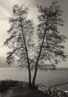 2 arbres