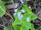 Petites fleurs fragiles - Isabelle TARAS