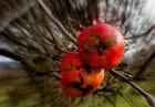dernières pommes - Josette GRINAND