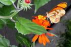Papillon - Pier Courtemanche