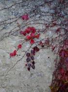 Petites feuilles rouges - Jocelyne DETANTE ex MENU