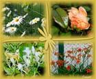 4 fleurs (FA) - Francine ANCEL