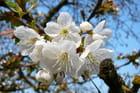Avant les fruits, les fleurs - Jacqueline DUBOIS
