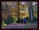 Promenade en forêt - Serge AGOMBART