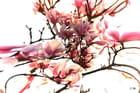 Magnolias For ever - Carina Catalano