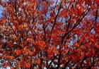 Rouge d'automne -