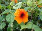 Gouttelettes sur petite fleur fragile - Isabelle TARAS