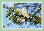 Air de printemps - Yolande MAYEUR