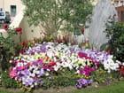 Parterre de fleurs (2) - Jean-pierre MARRO
