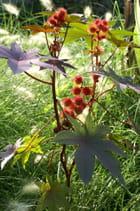 Fruits d'automne? - jacqueline joly