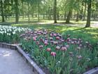 Tulipes blanches et mauves - Michèle de PUYRAIMOND