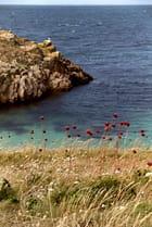 Fleurs et mer - Cecile PINCET